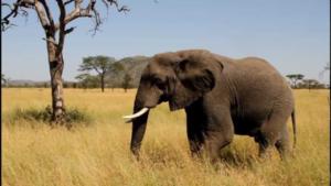 Der Elefant!