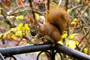 Das Eichhörnchengeheimnis